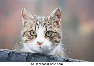 Closeup of tabby cat gazing out of a tyre
