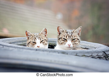 Two tabby cats sleeping in their tyre nest