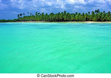 coastline in republica dominicana - coastline and tree in...