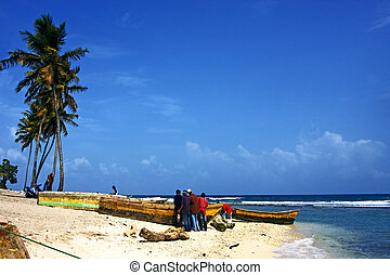 ocean palm and tree in republica dominicana - ocean...