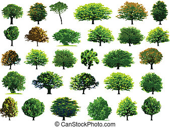 Collection green trees