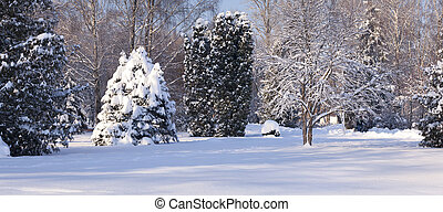 Snow-covered trees in the city park