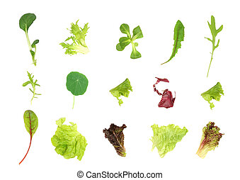 Salad Leaf Selection - Salad lettuce leaf selection, over...