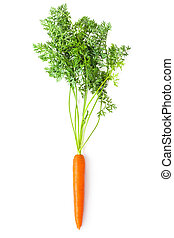 Root-crop of carrot with green tops. Isolated on a white.