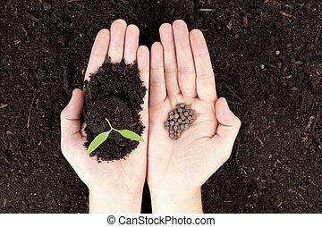 Manos, planta, semillas