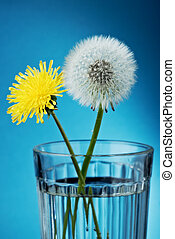 Dandelion in glass
