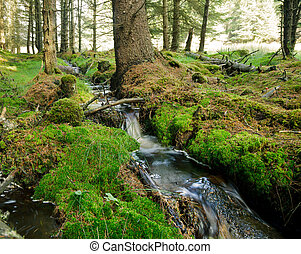 Forest stream - Small forest stream in Scotland