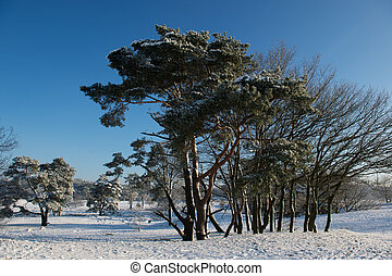 Snow in landscape