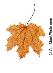 秋, 上に, 葉, 白, 隔離された