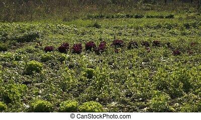 Red Salad 004