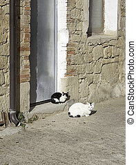 Wild Cats resting on the floor of the street, herd