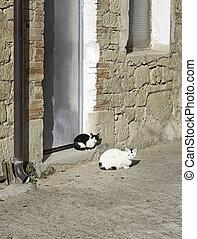 Wild Cats resting on the floor of the street, herd