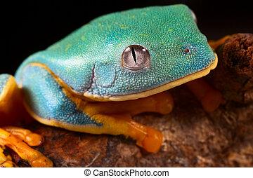 tree frog head