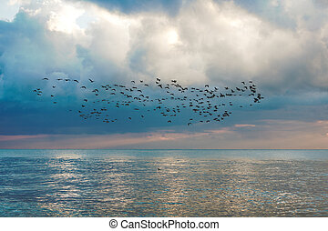 Flock of birds on seascape with blue sky and cloud...