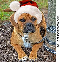 Holiday Puggle