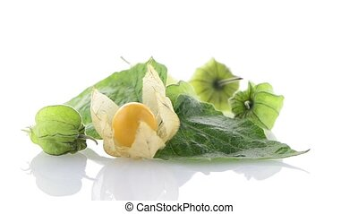 Physalis fruit Physalis peruviana rotating on a white...