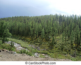 Taiga, bosque