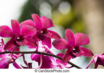 orchid  - beautiful orchid on green background