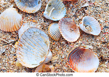shells - Beautyfull background of white, yellow and orange...