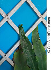 Leaves with blue walls