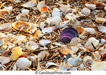 Beautyfull background of white, yellow and orange shells