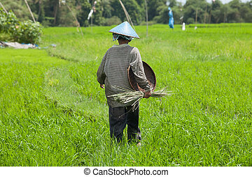 Female farmer - BALI - FEBRUARY 15. Female farmer working in...