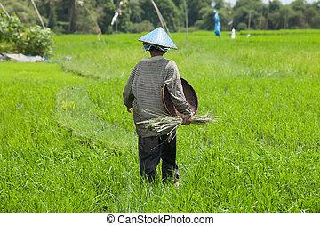 Female farmer - BALI - FEBRUARY 15. Female farmer working in...