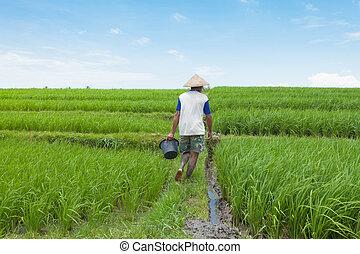 Rice farmer in Bali - BALI - FEBRUARY 15. Rice farmer using...