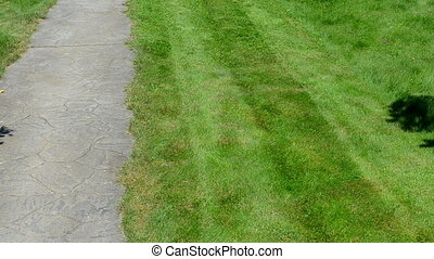 stone path cut grass