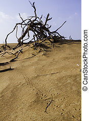 Animal tracks in desert sand leading to a gnarled woody...