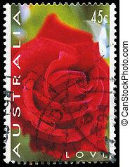 AUSTRALIA - CIRCA 1994 Rose