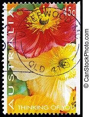 AUSTRALIA - CIRCA 1994 Poppies