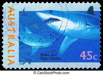 AUSTRALIA - CIRCA 1995 Mako and Tiger Sharks - AUSTRALIA -...