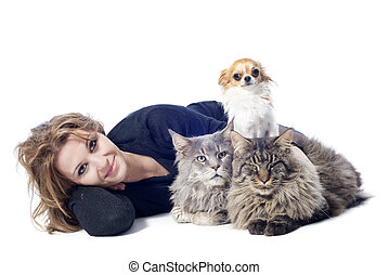 woman and pets - portrait of a purebred maine coon cats ,...