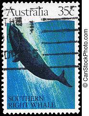 AUSTRALIA - CIRCA 1982 Southern Right Whale - AUSTRALIA -...