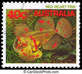 AUSTRALIA - CIRCA 1984 Red Velvet Fish - AUSTRALIA - CIRCA...