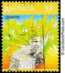AUSTRALIA - CIRCA 1987 Cockatoo - AUSTRALIA - CIRCA 1987: A...