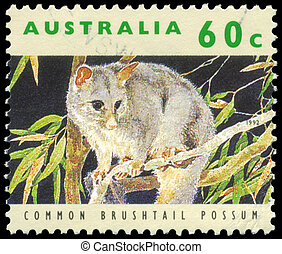 AUSTRALIA -CIRCA 1992 Common Brushtail Possum - AUSTRALIA -...