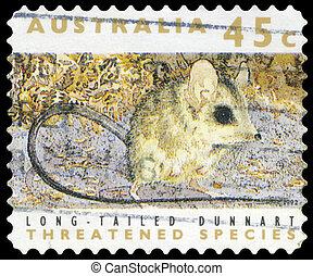 AUSTRALIA - CIRCA 1992 Dunnart - AUSTRALIA - CIRCA 1992: A...