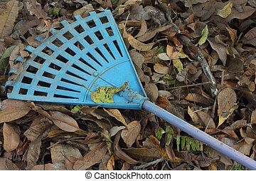 Leaves to rake leaves