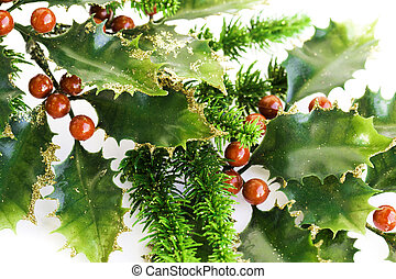 Holly berry plant with red berries on white background,...