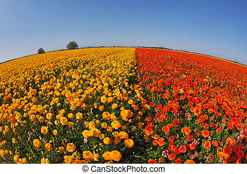 """The buttercups  by an objective""""Fish eye"""""""