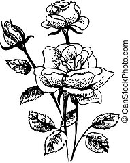 Roses. Hand-drawn illustration of rose flowers bouquet -...