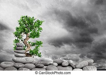 Zen stones - zen basalt stones and tree on the sky