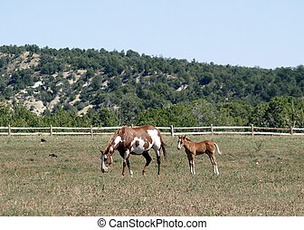 Mother and child horses eating on a meadow