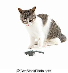 Cat watching a toy mouse in anticipation - Fun image of...