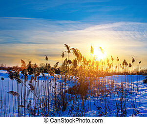 Silhouettes of wild vegetation at the sunset light in winter