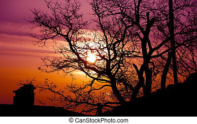 Sunrise colors the branches of trees