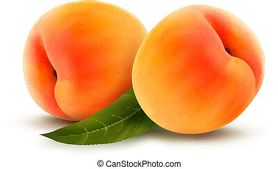 Rpe peach isolated on white Vector illustration