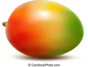 Mango isolated on white Vector illustration